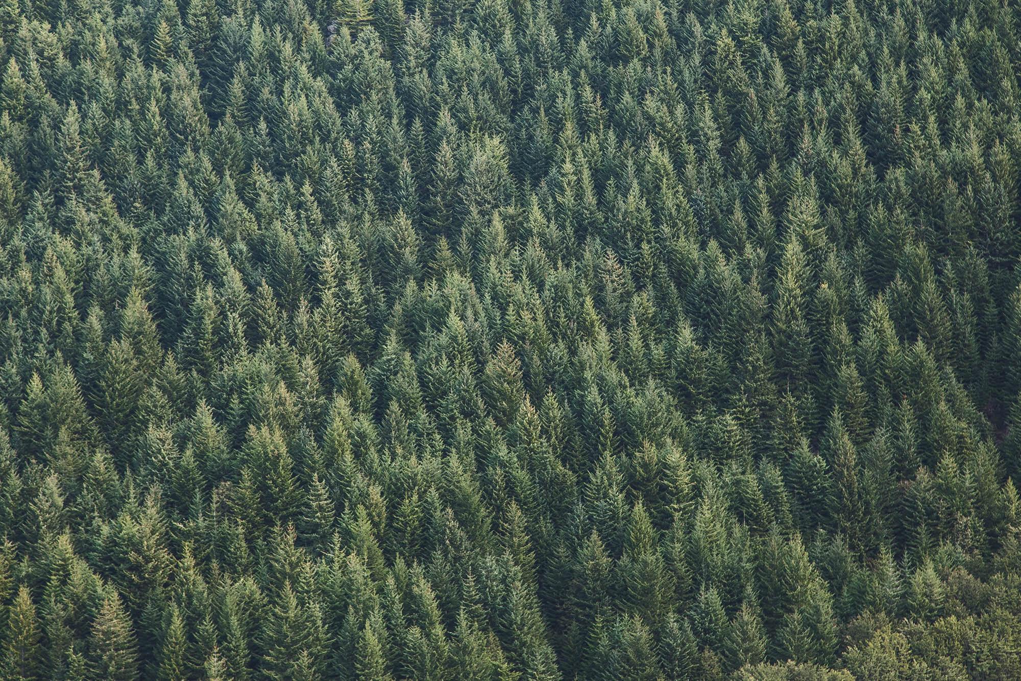 Holz ist Natur.