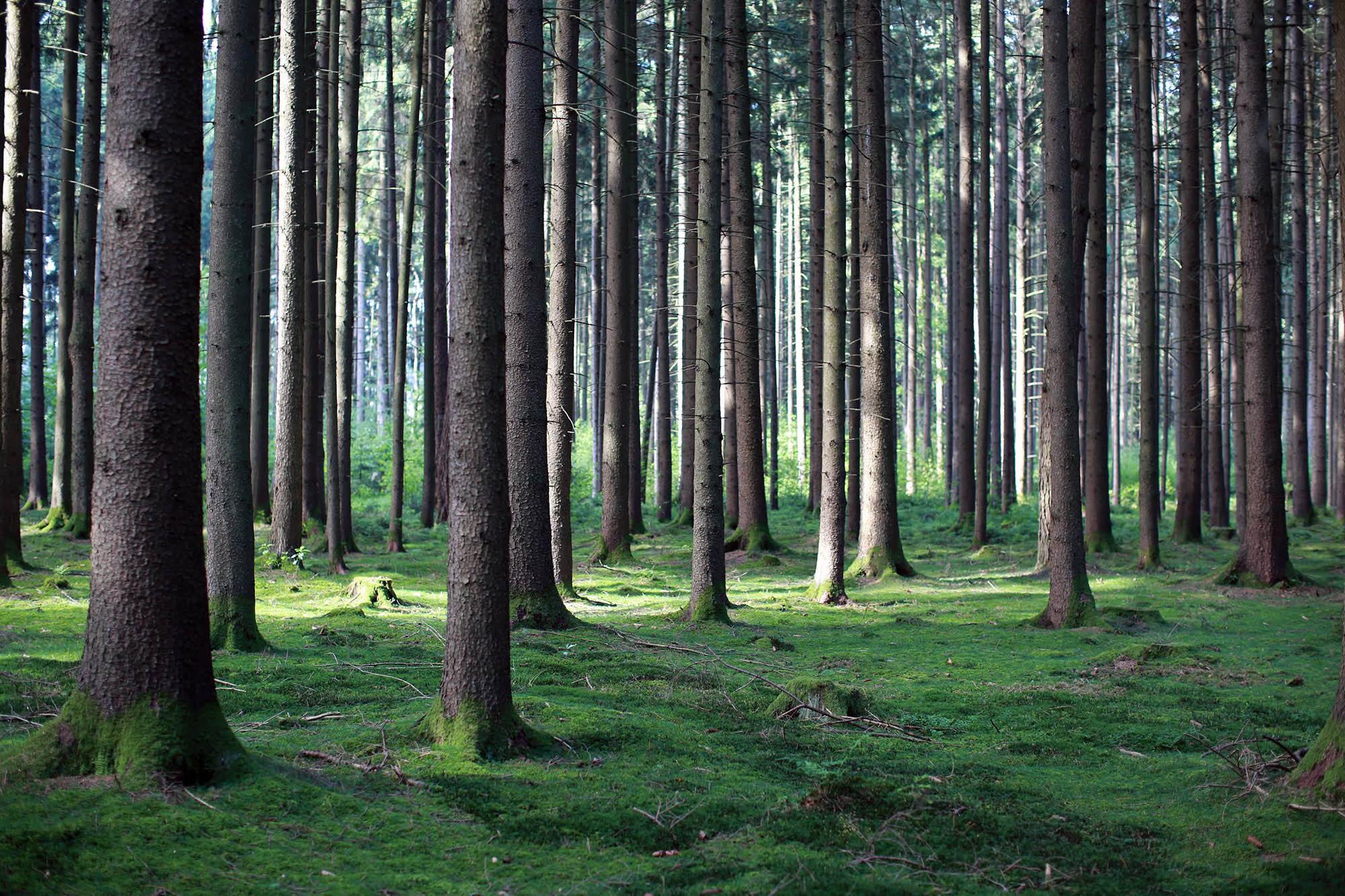 Holz ist Natur